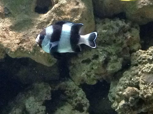 This was taken inside Sea life adventure,Southend!