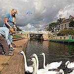 Feeding the swans at Trent Lock