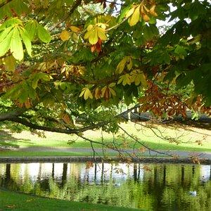 Autumn sunshine in Ward Park