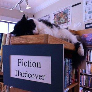 The Gallery Bookshop Cat