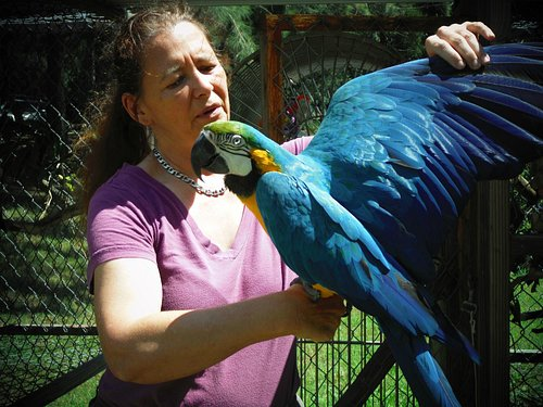 Many exotic birds, this is Jericho