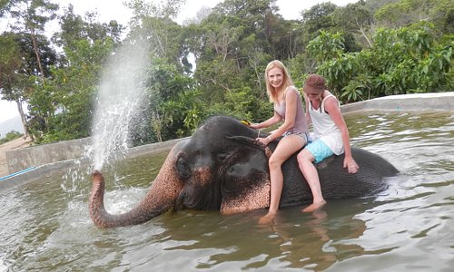 Elephant bath after trekking.