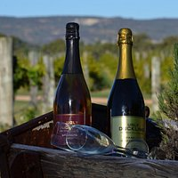 Wines and Vines