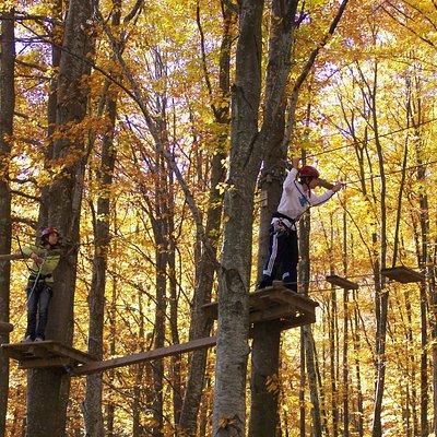 cerwood colori d'autunno