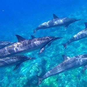 Experience the best 5 Star dolphin swim!