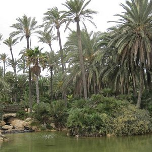 The Palmeral