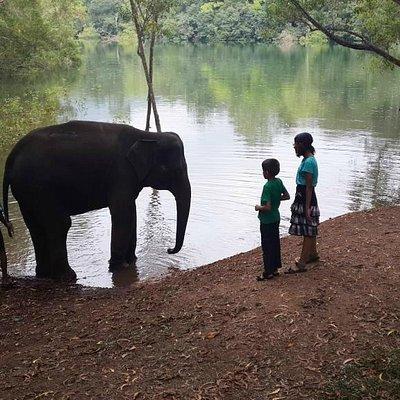 Elephant getting ready for a bath