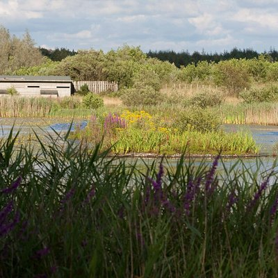 The Northern Wetlands and its Bird Hide