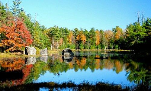 Autumn colours lining Hardy Lake