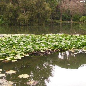 view of english garden