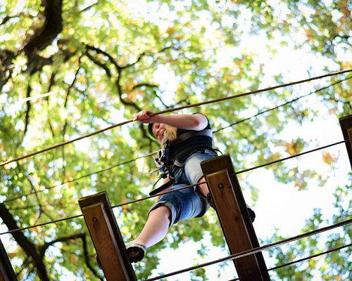 Treetop Adventure Beamish