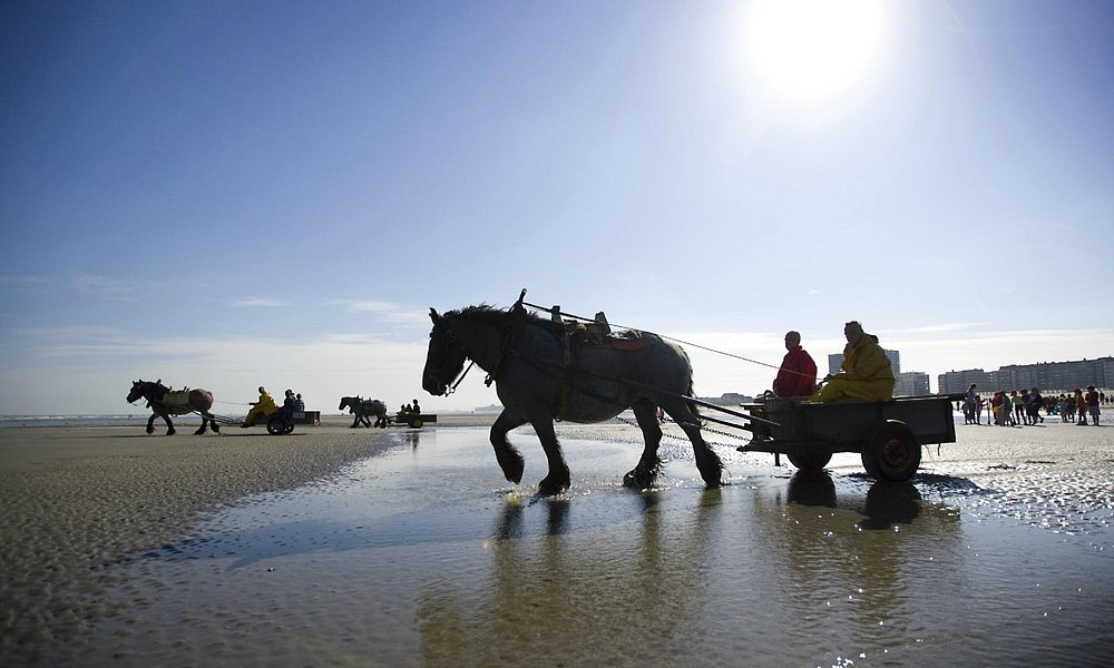 Shrimpfishing on horseback