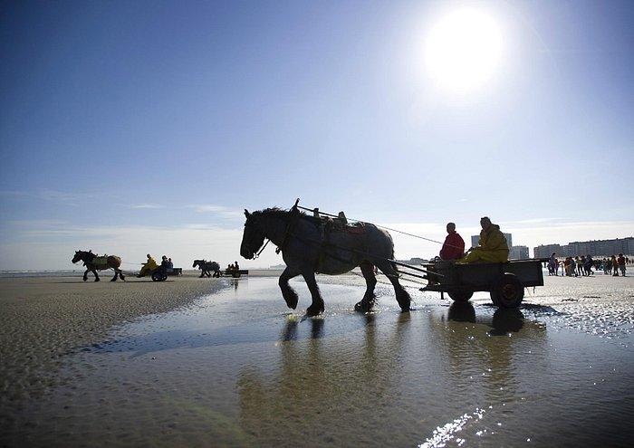 Shrimpfishing on horseback