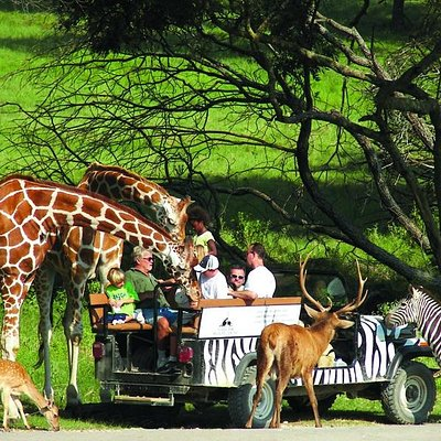 Join us on a guided tour through the park. Learn about conservation & feed the animals.