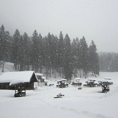 The deer feeding area.