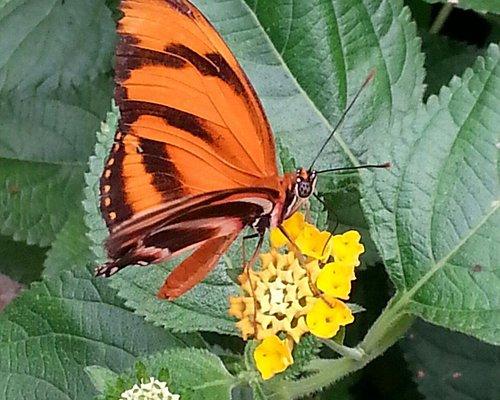 Impressionen aus dem Schmetterlingspark