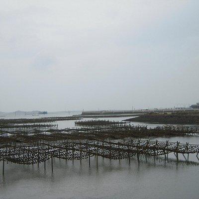 菜園里牡蠣繁殖場