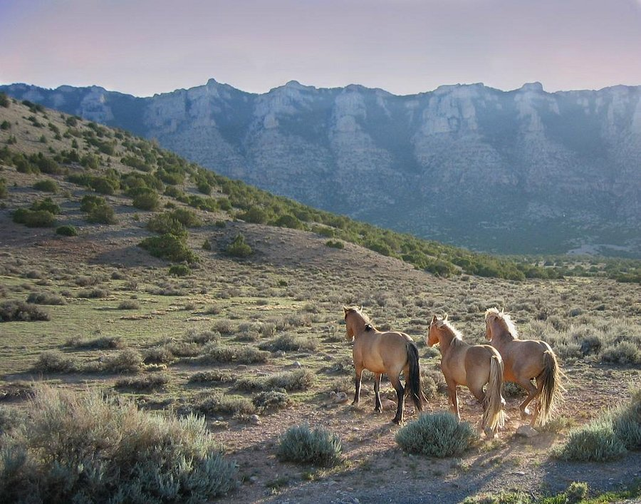 Big Horn Canyon, below spring camp - Picture of TX Ranch