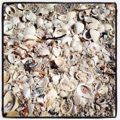 Shells galore at Little Hickory