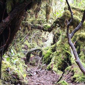 Fangorn Forest..