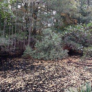 Molsbroek, de prachtige natuur (herfstperiode)