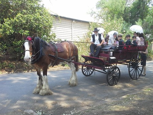 My Carriage Is big and the Whole family Can come