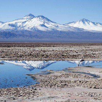 Salar de Atacama - Lily Lustosa -