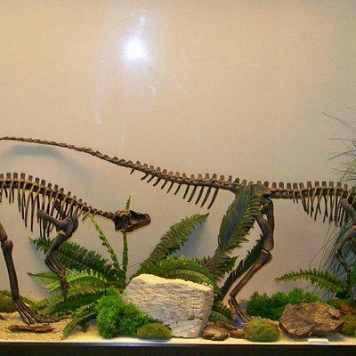 museo paleontológico, dinosaurios