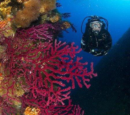 Diver in Marine Park of La Maddalena Palau