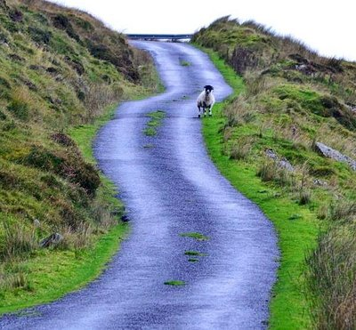 """""""Your Tour - Your Trail"""" with Killarney Guided Tours"""
