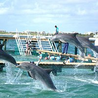 Dolphin Discovery Palace