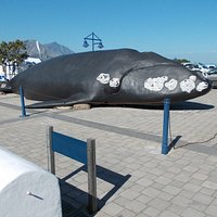 Life size model of Southern Right Whale outside museum