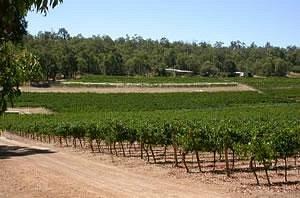 Vineyards at Hainault Vineyard & Cafe, Bickley Western Australia