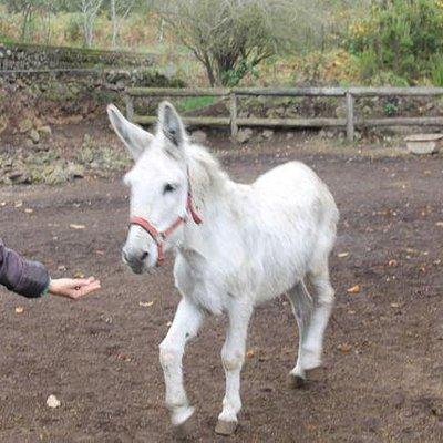 Pancho the donkey