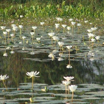 Thol Lake - Arrival of migratory birds