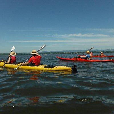 Votre première expérience en kayak sur le fleuve. Inspiration littorale.