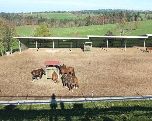 Vue sur les chevaux