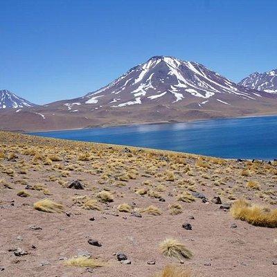 Lagunas Altiplánicas de Miscanti y Meñiques