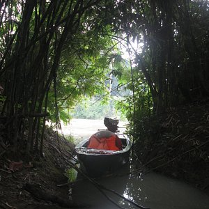 Walk in unique dipterocarp forest