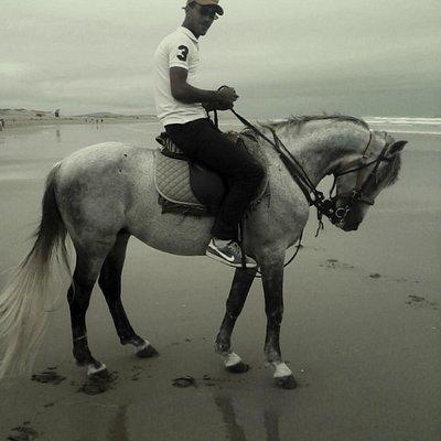 cisar horse