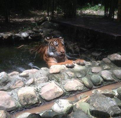 zanah taking a dip.