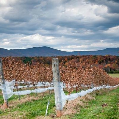 Fall view of Stinson Vineyards