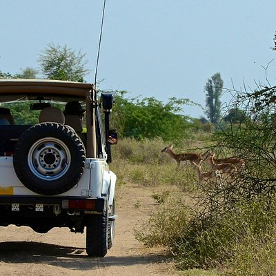 Black buck crossing our path during our off-road adventure