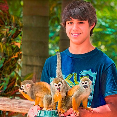 Feed our friendly squirrel monkeys