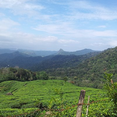 A view from Munnar