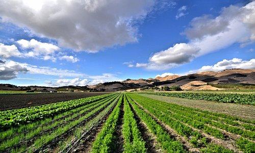 Talley Farms Vineyard