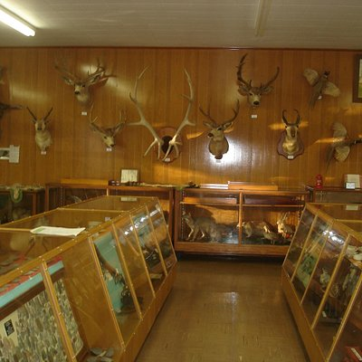 Roninger Museum - animals and artifacts