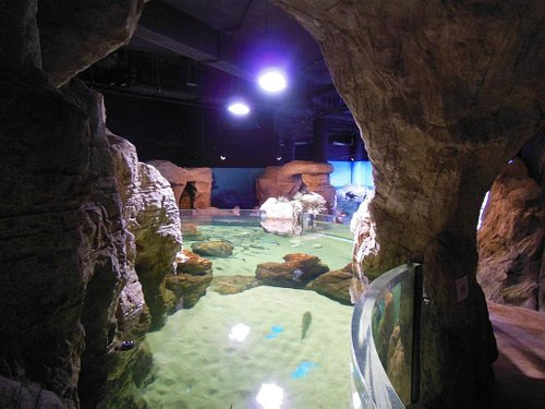 Wnętrze akwarium w Bugibba