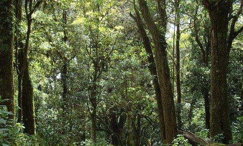 Eichenwald auf dem Huitepec