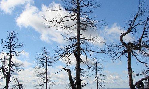 деревья на вершине горы